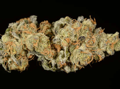 Girl Scout Cookies weed strain, cannabis, trichomes