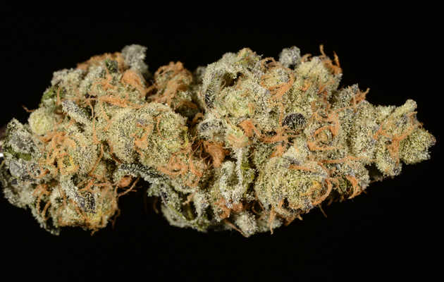 Everything You Need to Know About the Girl Scout Cookies Weed Strain