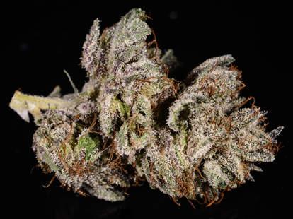 Master Kush weed strain, cannabis, buds, trichomes