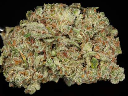 Trainwreck weed strain, cannabis, trichomes
