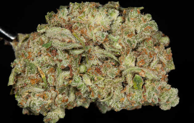 Everything You Need to Know About the Trainwreck Weed Strain