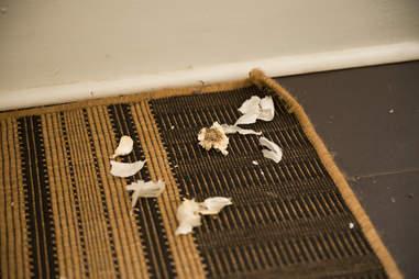 garlic on the floor