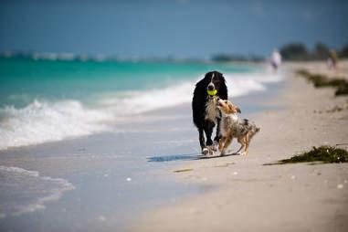 Boca Grande, beach dogs