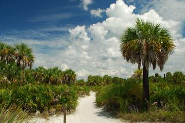 Callused Island State Park, beach, trees, palm trees