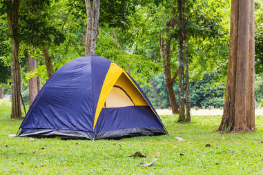 camping, tent, park, outdoors