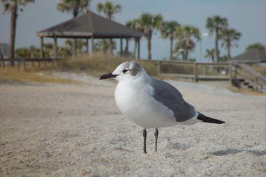 Amelia Island, seagull, beach hut