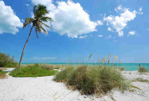 Captiva Island, palm tree, beach