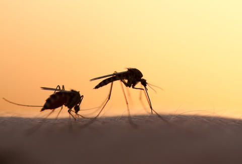 silhouetted mosquitos transmitting zika virus