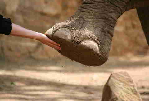 woman's hand touching elephant foot