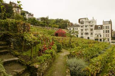 Paris vineyard in Montmartre district