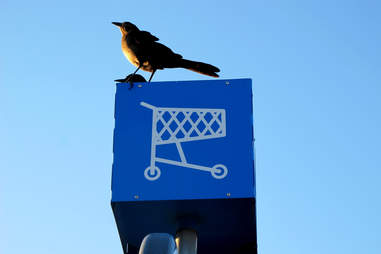 shopping cart sign bird crow walmart perched