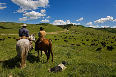 Cowboys with horses on dude ranch