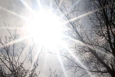 Sun shining through Minnesota's bare trees