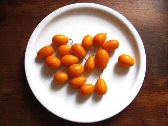 Handful of kumquats on white dish