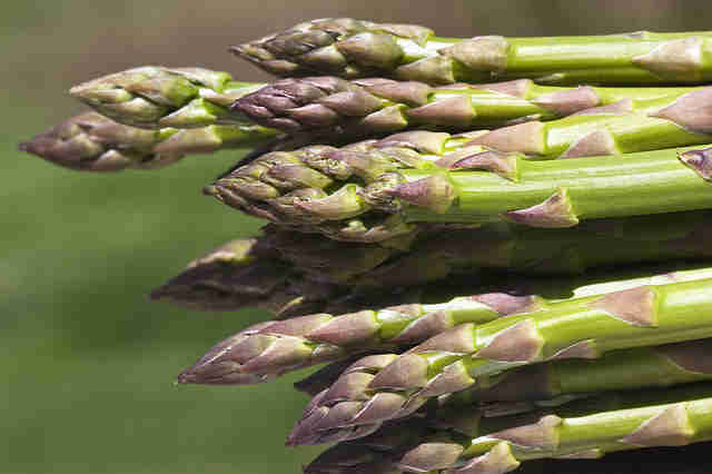 Asparagus in the wild