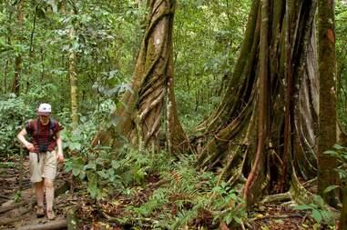 Tourist exploring Costa Rica's rainforests