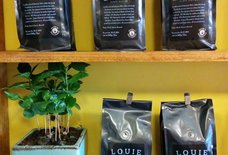 Louie Craft Coffee
