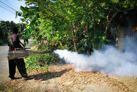 Fogging mosquito to prevent Zika virus