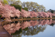 Everything You Absolutely Must Do in DC This Spring