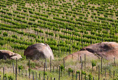 vineyards in guadalupe valley
