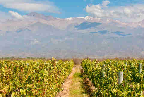vineyards in Mendoza, Argentina