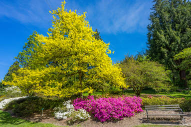 Washington Park Arboretum Seattle