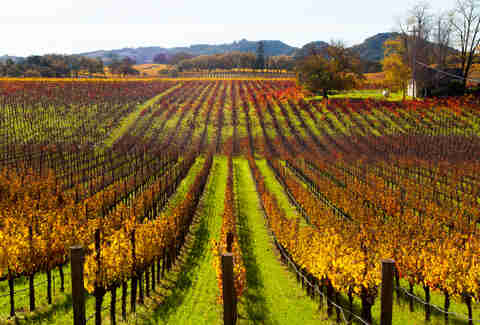 santa rosa california wine vineyard