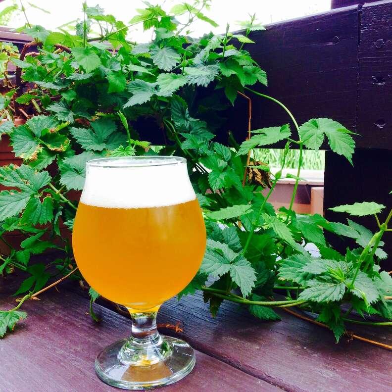 mystic brewery craft beer
