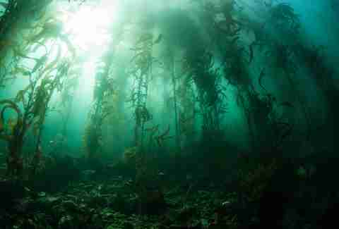 kely forest under sea california