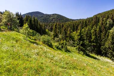 black forest germany field