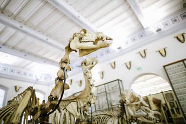 musée Fragonard à l'école vétérinaire in paris