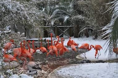Flamingos at Riverbanks Zoo Columbia SC