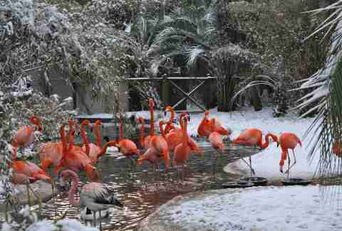 Flamingos at Riverbanks Zoo Columbia SC