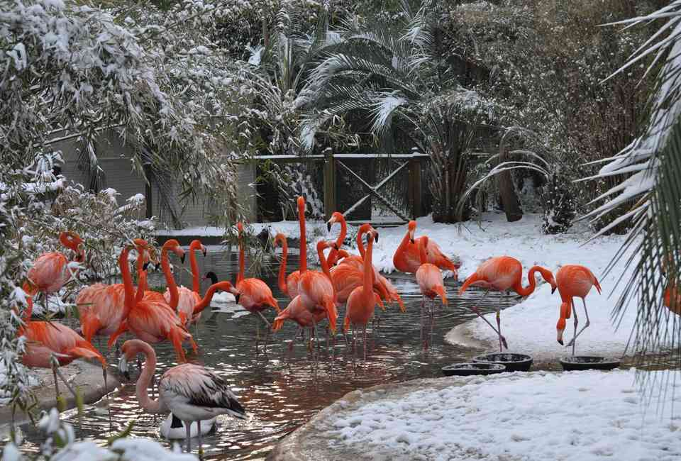 Best Zoos in the US: Underrated Zoos to Visit Across America
