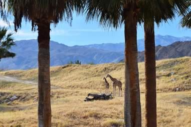 Living Desert Palm Springs