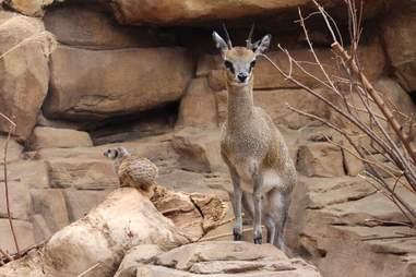Henry Doorly Zoo and Aquarium Omaha NE
