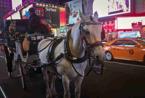 White horse in Times Square