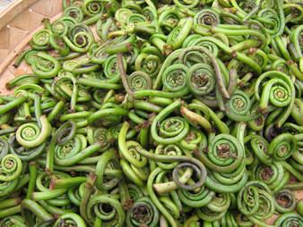 fiddlehead ferns, fresh fiddleheads