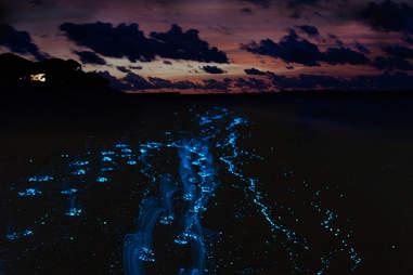Puerto Mosquito Bioluminescent Bay  Vieques Island in Puerto Rico