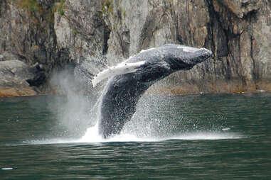 Farallon Islands Whale Watching