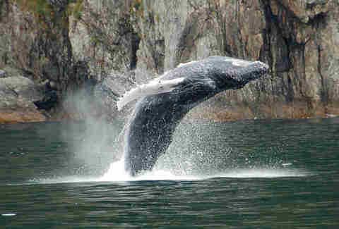 Farallon Islands Whale Watching