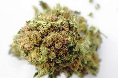 Mango kush marijuana strain weed