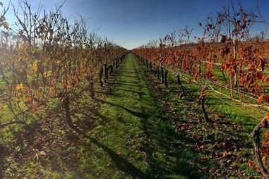 Newport Vineyards in Rhode Island