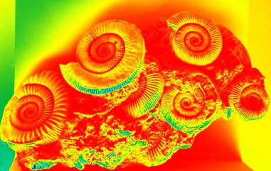fibonacci shells, neon