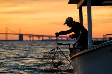 Cantler's Riverside catching crabs in Maryland