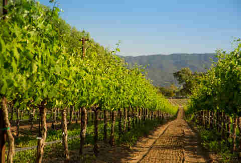 vineyard in Santa Barbara