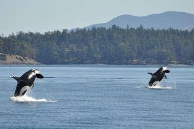 Orcas Island
