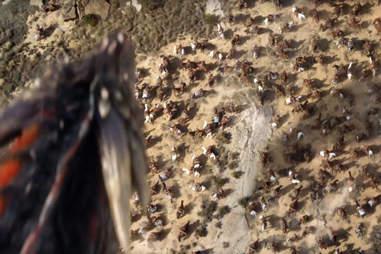 drogon dragon Game of Thrones season 6