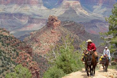 Grand Canyon mule hike
