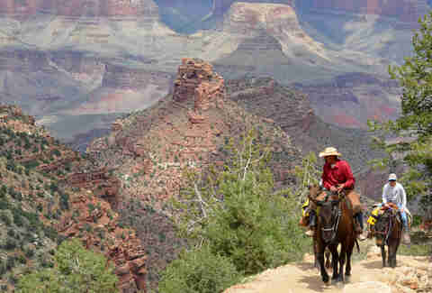 Grand Canyon mule hike